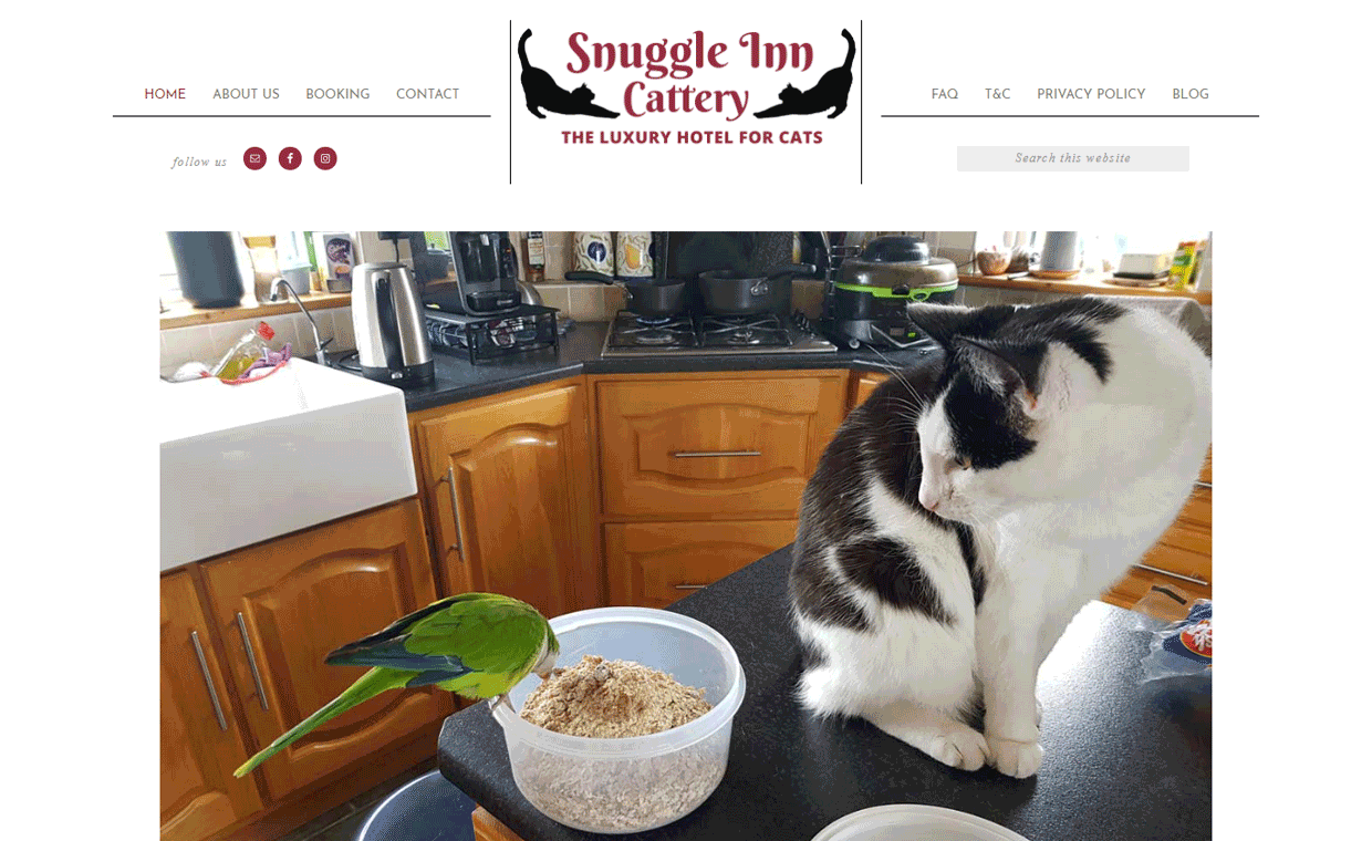 Pagecrafted affordable websites Galway - Snuggle Inn Cattery Featured